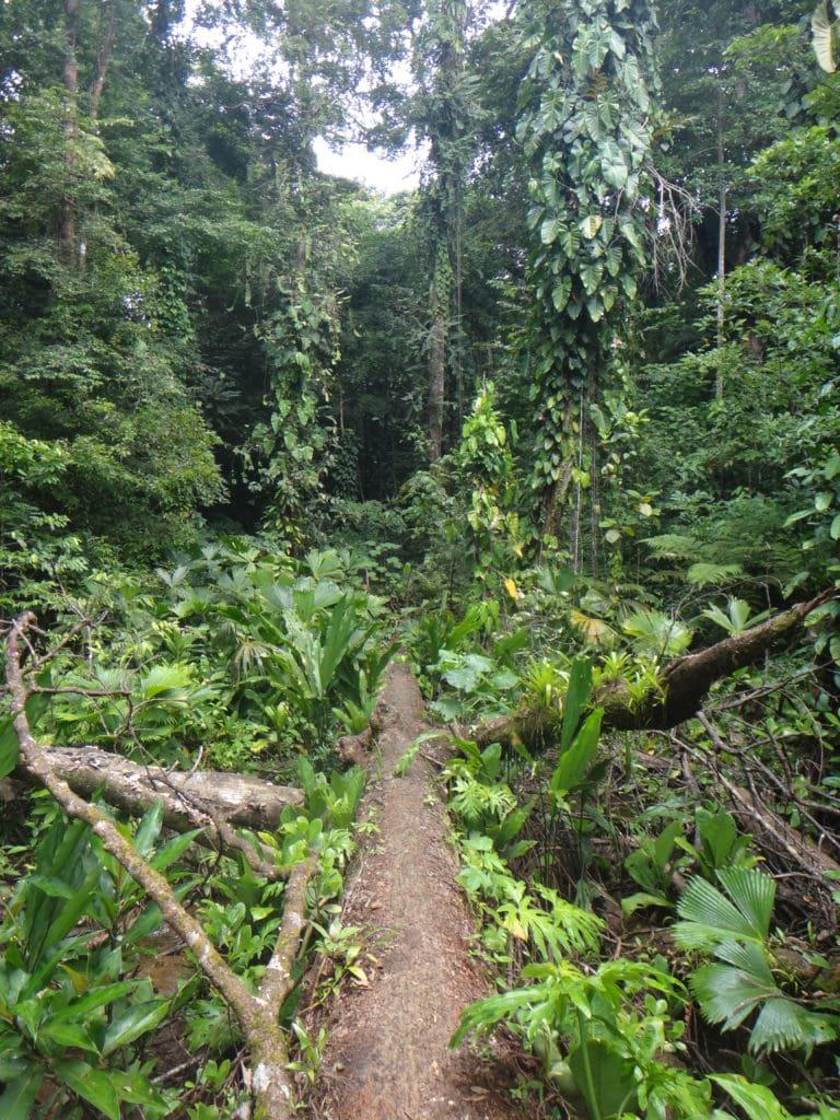 Isla Solarte, Bocas del Toro