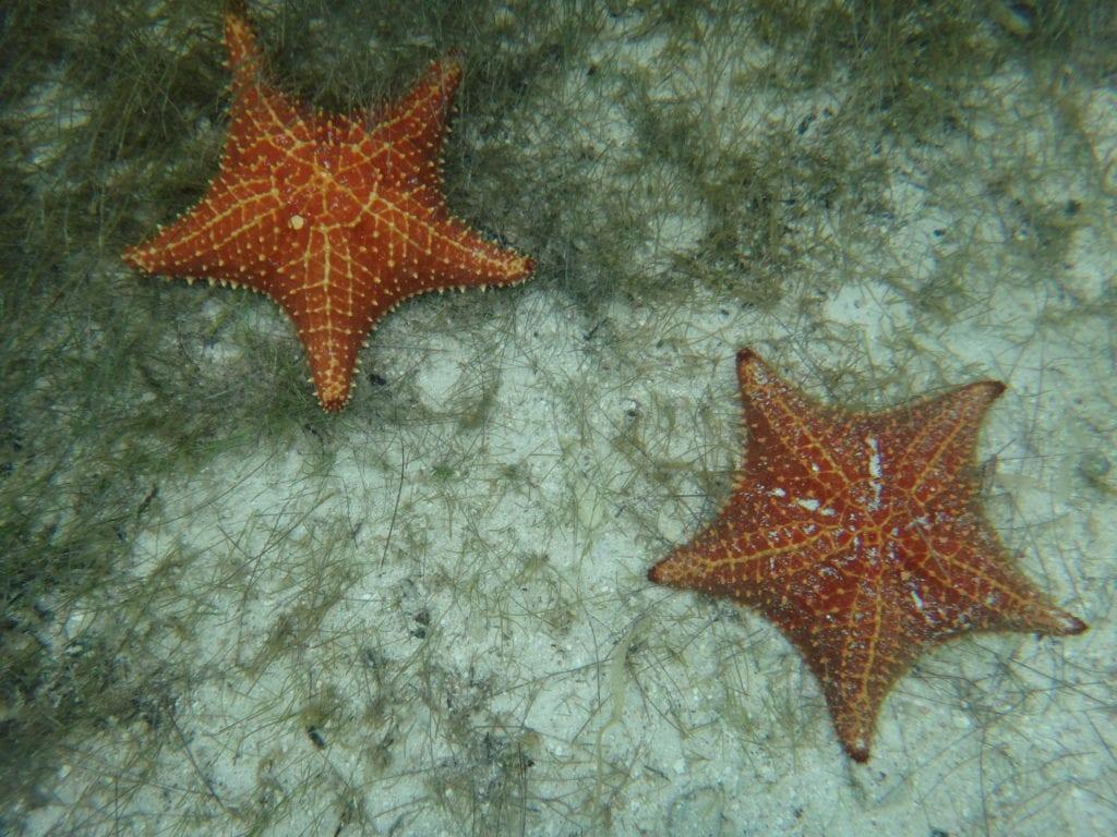 San Blas, onderwater sterren