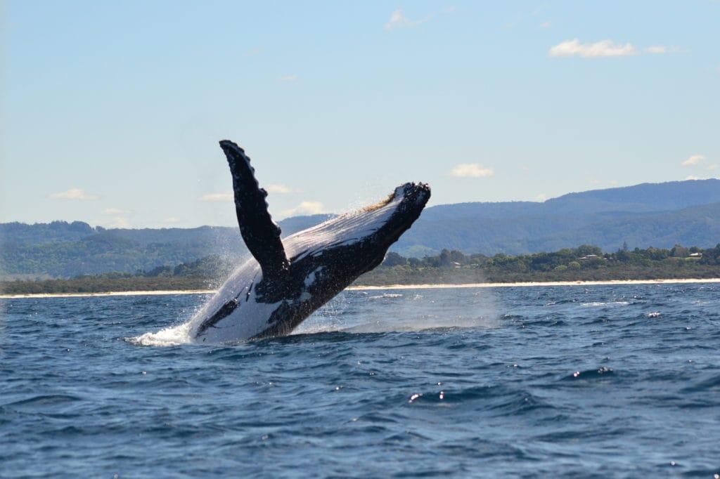 byron bay walvissen